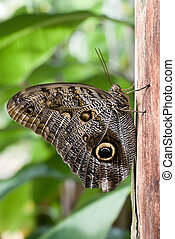 side profile of brown butterfly sitting on a tree.