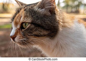 Side profilet of a street cat in the spring garden.