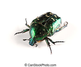 side view glossy bettle on a white background close up