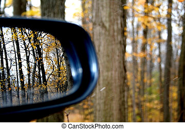 Side view mirror of car in maple trees