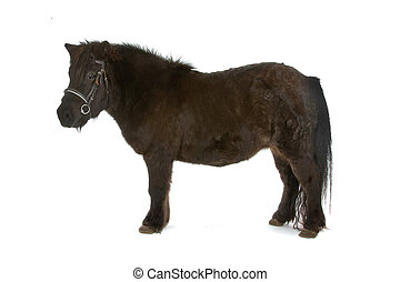 side view of a brown pony