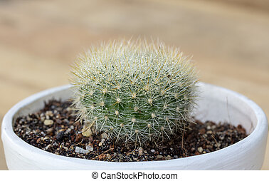 Side view of a Cactus with flower pot on wood table