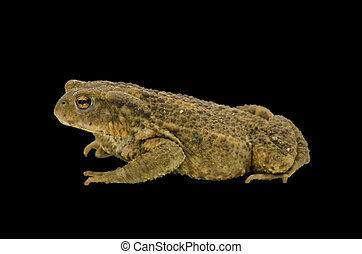 Side view of a frog