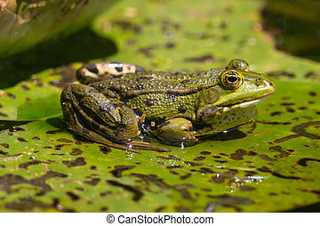 Side view of a green frog sitting