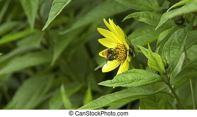 Side view of a honeybee on a flower