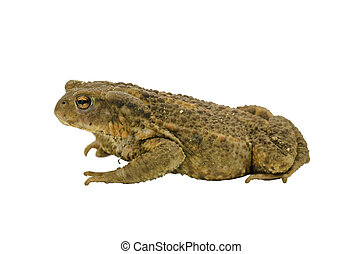 Side view of a toad