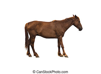 Side view of brown horse isolated
