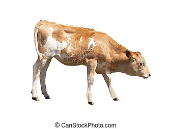 Side view of calf