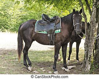 Side view of dark brown horse