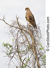 Eagle perched on top of tree