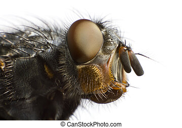 side view of house fly in extreme close up