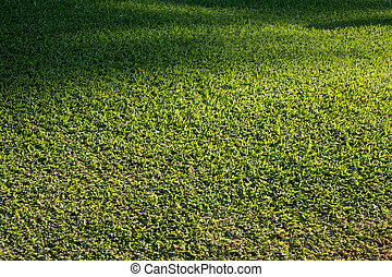 Side view of newly mown grass lawn
