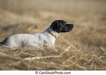 side view of pointer - side view of dotted pointer...
