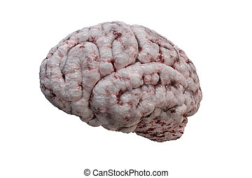 Side view on human brain isolated on white background. 3D render