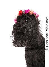 side view portrait of a cute poodle wearing flowers headband