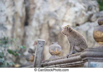 Side view thailand monkey on the wall