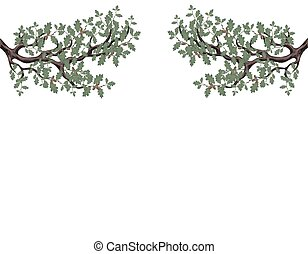sides., 兩個都, 容量, 分支, gradient., 橡木, 橡子, 二, 插圖, 被隔离, 背景。, 沒有, 綠色, 柵格, 白色, 圖畫