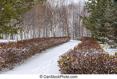sides., entrambi, inverno, file, winter-time, inverno, alley., albero, anno, winter-tide, tempo, coldest, strada