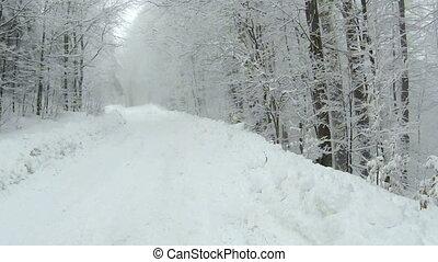 sides., montagnes, hiver, neige, arbres, vide, temps, couvert, pendant, route, vue