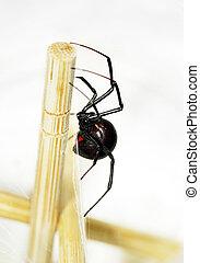 sideview, negro, araña, viuda