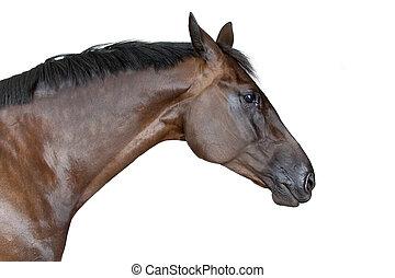 sideview, von, pferd