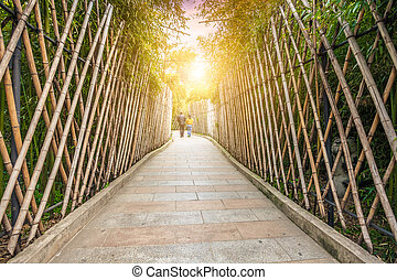 Sidewalk in the bamboo forest