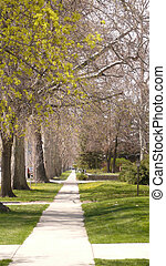 sidewalk lined with trees - front view of sidewalk with...