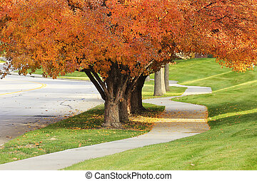Sidewalk with flowering pear trees in a fall
