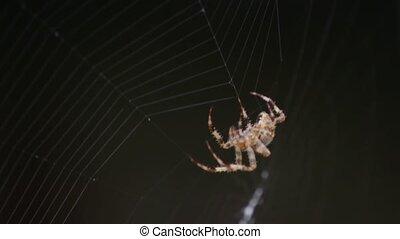 sieć, przędzenie, pająk