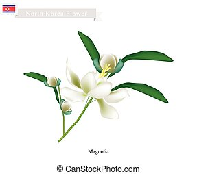Siebold's Magnolia The National Flower of North Korea -...