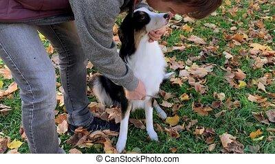 sien, chien, peigner, homme