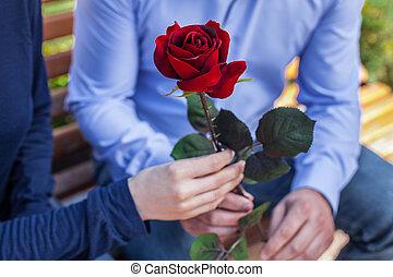 sien, donner, rose, couple, haut, jeune, park., séduisant, fin, petite amie, portrait, homme