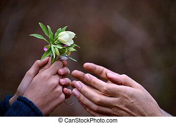 sien, enfant, donner, père, main, fleurs