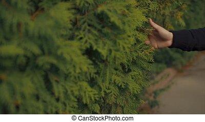 sien, feuilles, main, closeup, tenue, homme