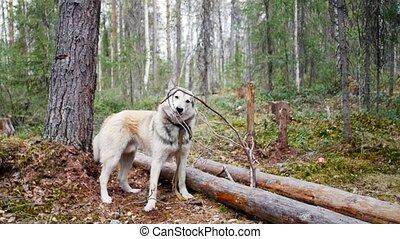 sien, fond, chien, bouche, crosse, tenue, forêt
