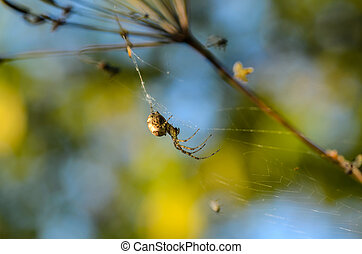 sien, toile, forêt, centre, araignés