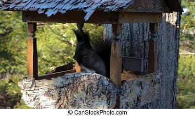 sien, triangle, écureuil, arbres., pelucheux, parc, queue, poitrine, sauter, par, escalade, noir, blanc, public