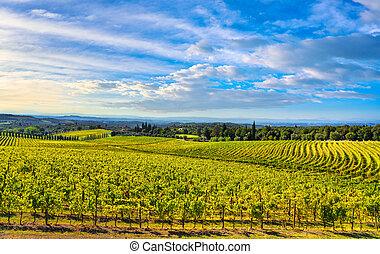 siena, toscane, sunset., italie, chianti, vignoble, panorama