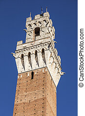 Siena town hall seen afternoon. Siena, Tuscany, Italy