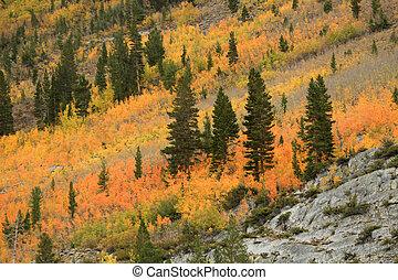 sierra, bjerge, farver, californien, fald