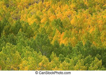 sierra, montagnes, couleurs, californie, automne