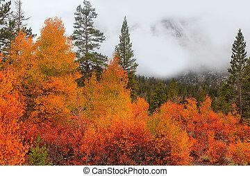 Sierra Nevada mountains fall foliage
