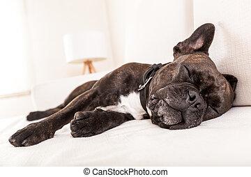 siesta sleeping dog
