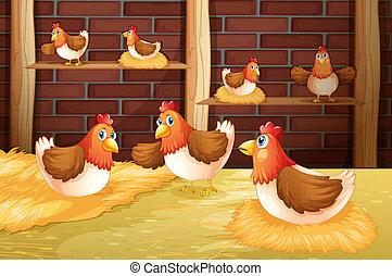siete, gallinas