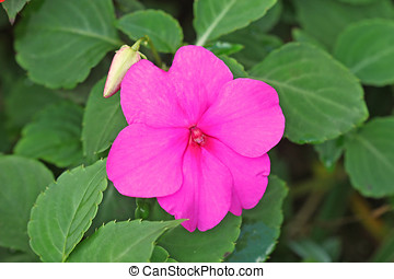 Sigle Flower