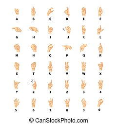 Sign language interpreter, latin alphabet signs on white -...