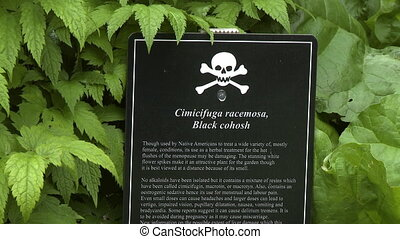 Steady, close up shot of a sign warning visitors of the poisonous Black cohosh plant.