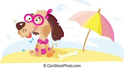 signora, spiaggia, cane
