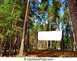 signpost, em, a, floresta