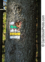 signs on the tree